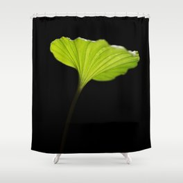 Leaf of the nervilia aragoana  Shower Curtain