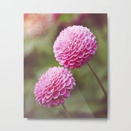 Chrysanthemums in Afternoon Light Metal Print