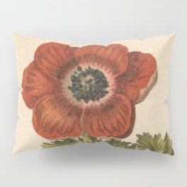 1800s Encyclopedia Lithograph of Anemone Flower Pillow Sham