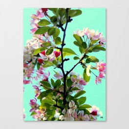 Tree Flowers Canvas Print
