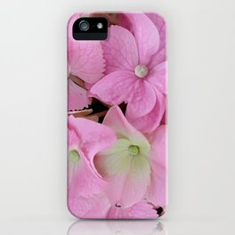 Inflorescences of hydrangea macrophylla. Pink floral hortensia background iPhone Case