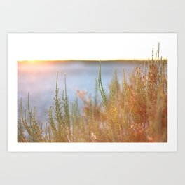 Mediterranean plants during sunset in the Camargue, France Art Print