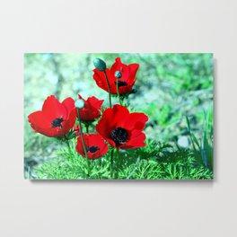 Red Anemones Metal Print