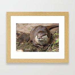 Sunning Otter Framed Art Print