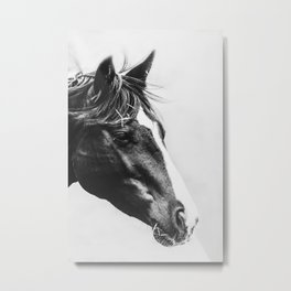 Horse Head Black and White Photography  Metal Print