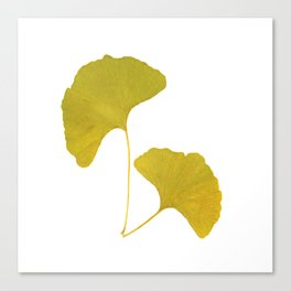 Ginkgo Leaves... Canvas Print