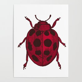 Red Lady Bug - white background Poster