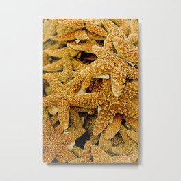 Summer Photo : Starfishes in Key West, FL Metal Print