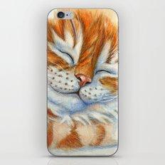 Sleeping Ginger Kitten A092 iPhone & iPod Skin