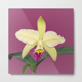 Stunning cream and magenta orchid flower Metal Print