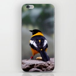 Troupial Feathers iPhone Skin