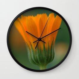 Marigold flower 6 Wall Clock