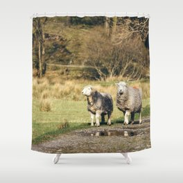 Herdwick sheep stood on footpath. Cumbria, UK. Shower Curtain