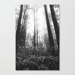 Trees // Fog // BW Canvas Print