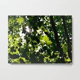 Green Maple Leaf PattrnTree Leaves Parallax Sunshine Shows Leaves Green Color Metal Print