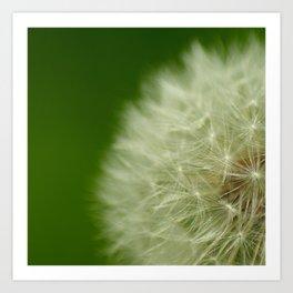 Dafodil seeds Art Print