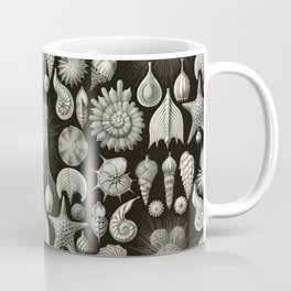 Ernst Haeckel - Thalamphora (Seashells) Coffee Mug