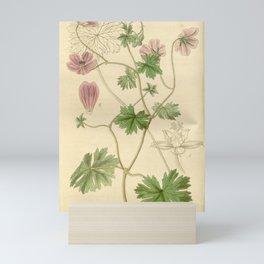 Flower 3732 geranium cristatum Crested Seeded Crane s Bill1 Mini Art Print