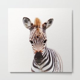 Baby Zebra, Baby Animals Art Prints by Synplus Metal Print