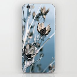 Winter Seed Pods iPhone Skin