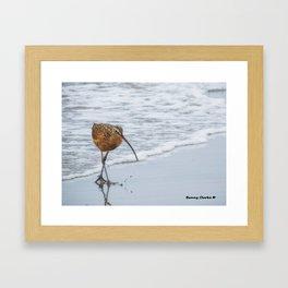 Long Billed Curlew Framed Art Print