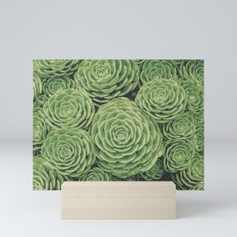 Succulents | Aeoniums | Garden Plants | Pot Plants | Mini Art Print