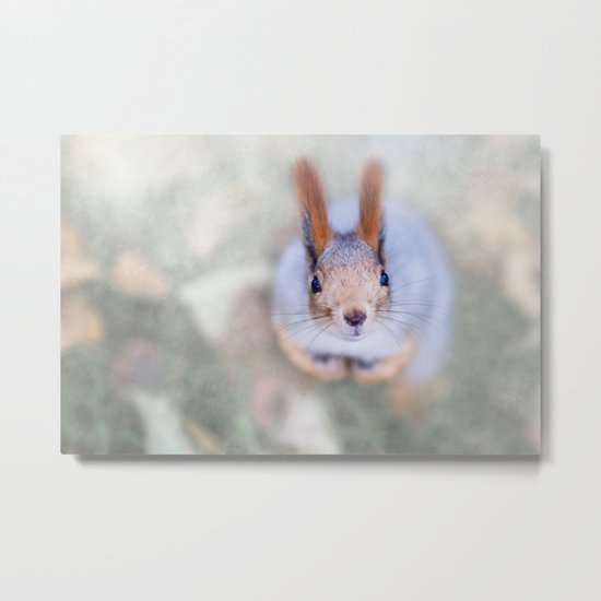 Squirrel looks at you from the bottom up Metal Print