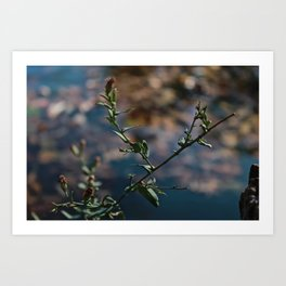 plants Art Print
