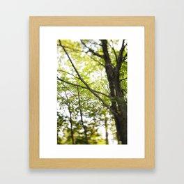 More trees! Framed Art Print