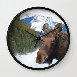 Beautiful Moose in Jasper National Park Wall Clock