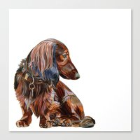 dachshund Canvas Prints featuring Dachshund by Anne Hviid Nicolaisen