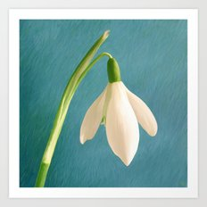Single Snowdrop Art Print