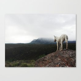 Bella On The Mountain Canvas Print