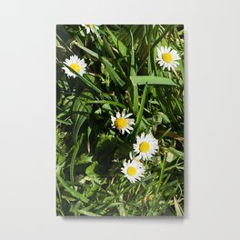 Spring Daisy Photography Print Metal Print