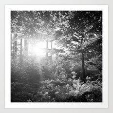 Sundown in the Forest Art Print