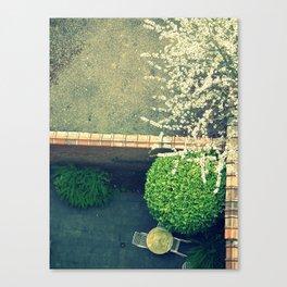 springing. Canvas Print