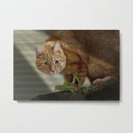 Cat out on a Limb Metal Print