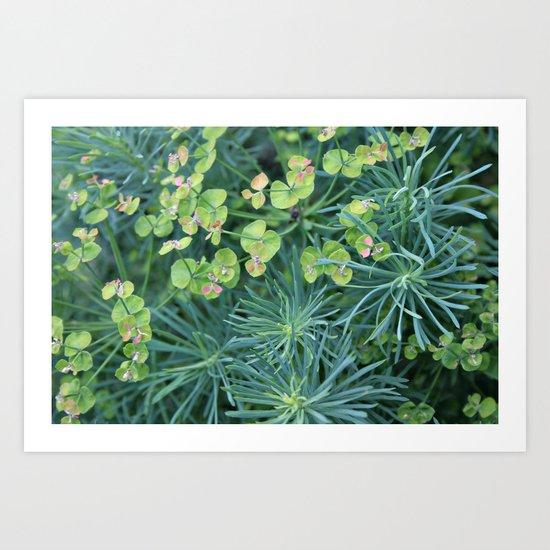 """Euphorbia Cyparissias """"Fens Ruby"""" Art Print"""