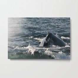 humpback whale sighting Metal Print