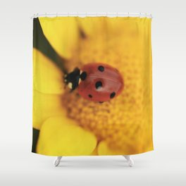 Ladybug on yellow flower - macro still life - fine art photo for interior design Shower Curtain