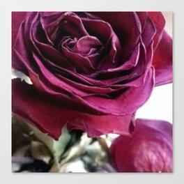 Rose photo Canvas Print