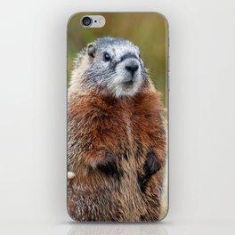 Yellow-Bellied Marmot iPhone Skin