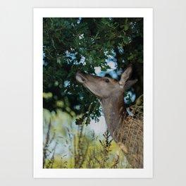 Deer Reaching For The Best Art Print