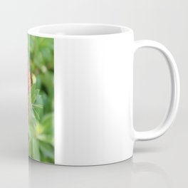 Beautiful Bottle Brush Flower With Garden Background Coffee Mug