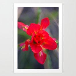 Springtime Paintbrush Wildflower Art Print