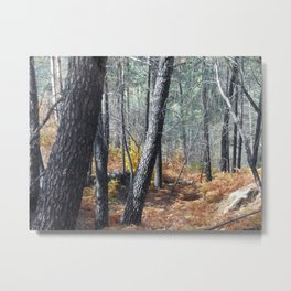 Fall Forest with Ferns Metal Print