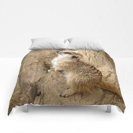 Meerkat 0115 Comforters