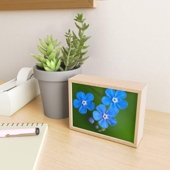 Brunnera flowers and buds Framed Mini Art Print