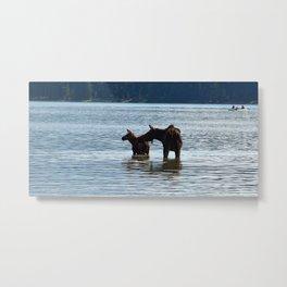 Moose and calf in Maligne Lake, Jasper National Park Metal Print