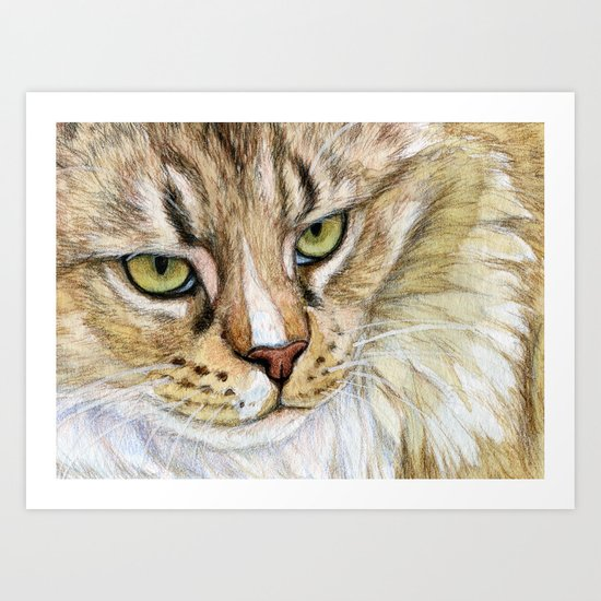 Maine coon cat - Soft portrait 725 Art Print